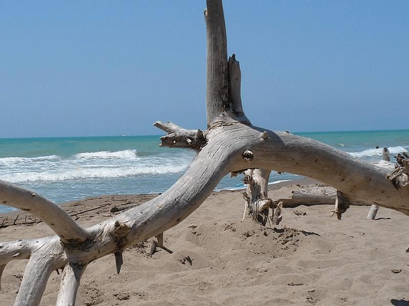 agriturismo maremma vicino al mare - marina di alberesegallery6